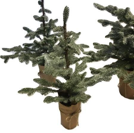 X-mas Tree Picea S